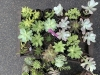 Succulents in the rain on April 24th.   The Market moved back to Pioneer Park Pavilion around Mother's Day. It runs every Saturday from 9 a.m. to 2 p.m.