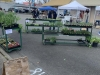 Stand selling plants and starters on April 24th. The Market moved back to Pioneer Park Pavilion around Mother's Day. It runs every Saturday from 9 a.m. to 2 p.m.