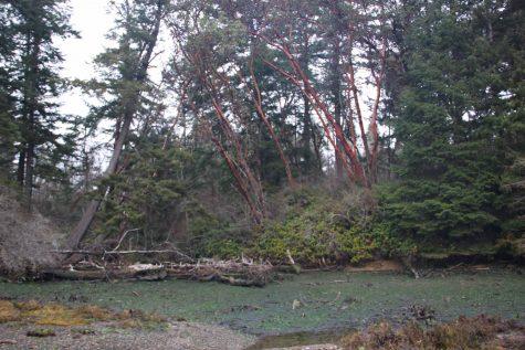 Anderson Island Park Expansion Preserves Shoreline